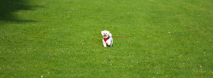 Liten hund i mitten av fältet Arkivfoton