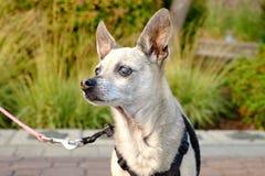 Liten hund i solljuset Arkivfoto
