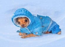 Liten hund i varma overaller Fotografering för Bildbyråer