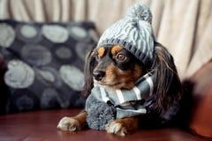 Liten hund på en soffa med vinterkugghjulet på arkivfoton