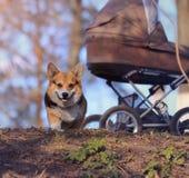 Liten hund på gatan fotografering för bildbyråer