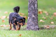 Liten hund som tycker om det fria fotografering för bildbyråer