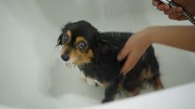 Liten hundbadning lager videofilmer