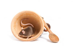 Liten hungrig mus med en lång svans Arkivfoto