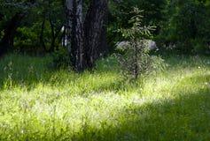 Liten julgran på en gräsmatta för grönt gräs som tänds ljust av solljus Arkivbilder