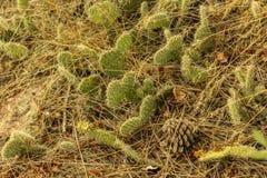 liten kaktus Arkivfoton