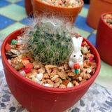 liten kaktus Royaltyfri Foto