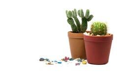 liten kaktus Arkivfoto