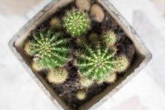 liten kaktus Fotografering för Bildbyråer