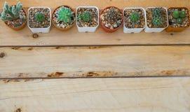 Liten kaktus för bästa sikt Royaltyfri Foto