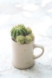 Liten kaktus i koppen Arkivbild