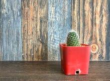 Liten kaktus i kruka på hyllan för den hem- garneringen Fotografering för Bildbyråer
