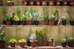 Liten kaktus i krukor Arkivbilder