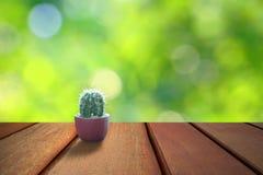 Liten kaktus på hyllaräknare Arkivbild