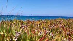 Liten kaktus som förbiser havet Arkivfoto