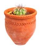 Liten kaktus som planteras på en röd lerakruka Royaltyfria Bilder