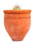Liten kaktus som planteras på en röd lerakruka Arkivbilder
