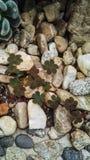 Liten kaktusblick som växt av släktet Trifoliumträd Arkivbilder