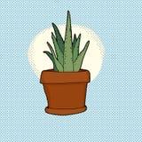 Liten kaktusHouseplant Royaltyfri Bild