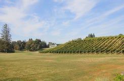 Liten kanadensisk vingård Royaltyfri Bild