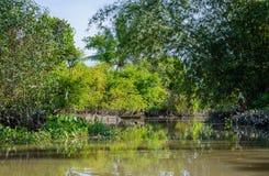 Liten kanal i den Mekong deltan Arkivbild