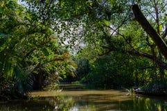 Liten kanal i den Mekong deltan royaltyfri bild