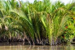 Liten kanal i den Mekong deltan arkivbilder