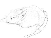 Liten kanin förestående Arkivbild