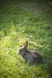 Liten kanin i solsken med stor gräs- bakgrund Arkivbild