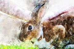 Liten kanin på grönt gräs i sommardag Arkivbilder