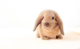 Liten kanin på vit bakgrund little oavbrutet tjata Royaltyfria Bilder