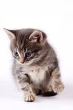 Liten katt Arkivbilder