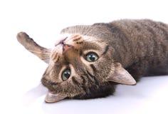 liten katt Arkivfoton