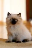 liten katt Arkivfoto