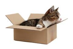 Liten katt för nyfiken i ask Royaltyfria Bilder