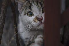 Liten katt för pott arkivfoto
