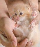 Liten katt i folkhänder Fotografering för Bildbyråer
