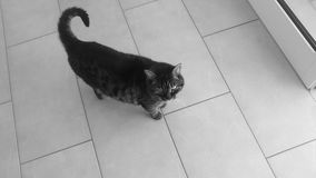 Liten katt i hus Arkivfoto