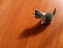 Liten katt och dess skugga Fotografering för Bildbyråer