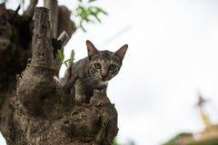 Liten katt på ett träd Royaltyfria Foton