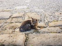 Liten katt på jordningen royaltyfri bild