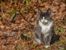 Liten katt som ser med att skela ögon Royaltyfri Bild