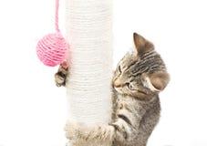 Liten katt som spelar med bollen Fotografering för Bildbyråer