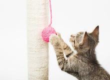 Liten katt som spelar med en rosa boll Arkivbild