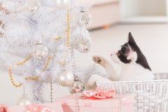 Liten katt som spelar med julgranprydnader Arkivfoto