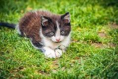 Liten katt som spelar på gräset Arkivbilder