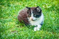 Liten katt som spelar på gräset Royaltyfria Bilder