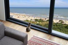 Liten katt som utanför ser på stranden och sjösidan Royaltyfri Bild
