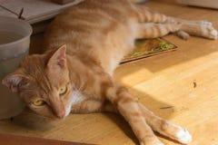 Liten katt som vilar på tabellen Arkivfoto