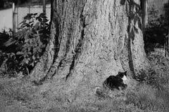 Liten katt som vilar under träd i tjeckisk by av Libesice under vårmorgon med svartvit stylization Royaltyfri Bild